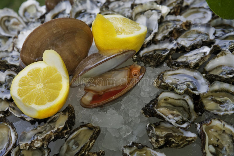 Download And Oyster stock image. Image of dining, clams, gourmet - 15245533
