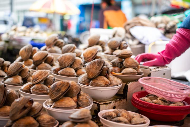 Clam sell on fish market in Busan. You can smell the hishes everwhere, everything is fresh and nice royalty free stock photo