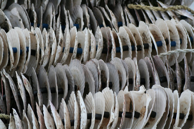 Shells. Outside a farm in North Japan royalty free stock images
