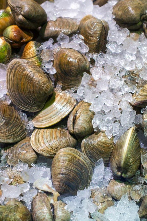 Clams в реальном маштабе времени свежего couaght рыбный базар на кровати льда стоковые изображения rf