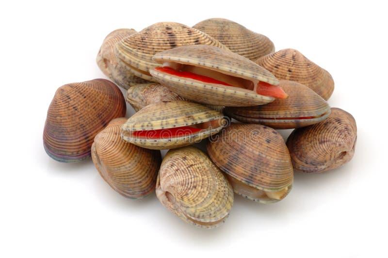 clams живут стог стоковые изображения