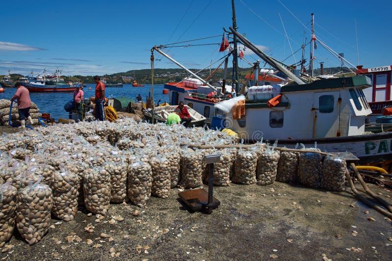 Clams посадки стоковая фотография