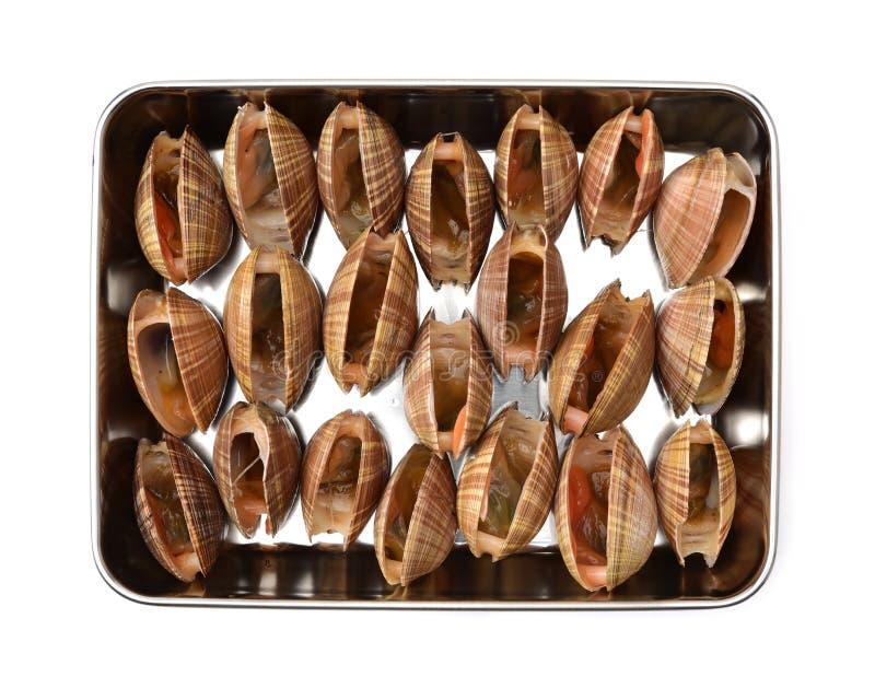 clams royalty-vrije stock fotografie