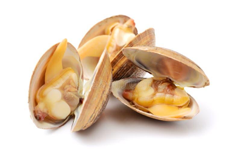 clams stock fotografie