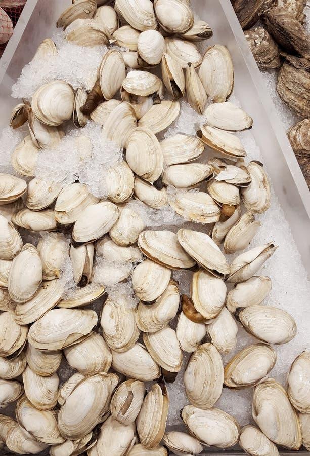 clams royalty-vrije stock foto's