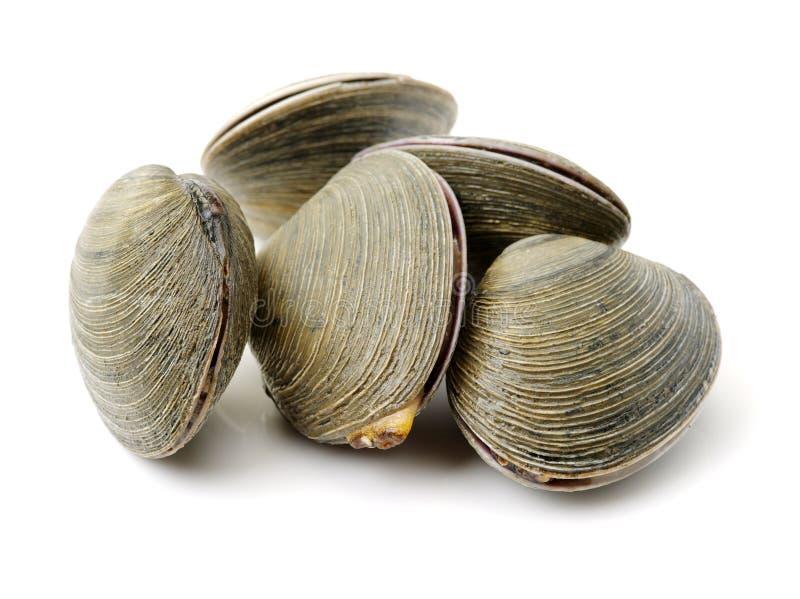 clams stock foto's