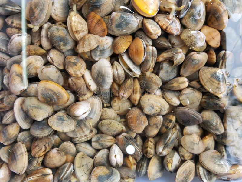 clams royalty-vrije stock afbeeldingen