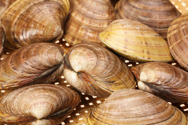 Download CLAMS stock photo. Image of ingredient, blanch, peel - 22142116