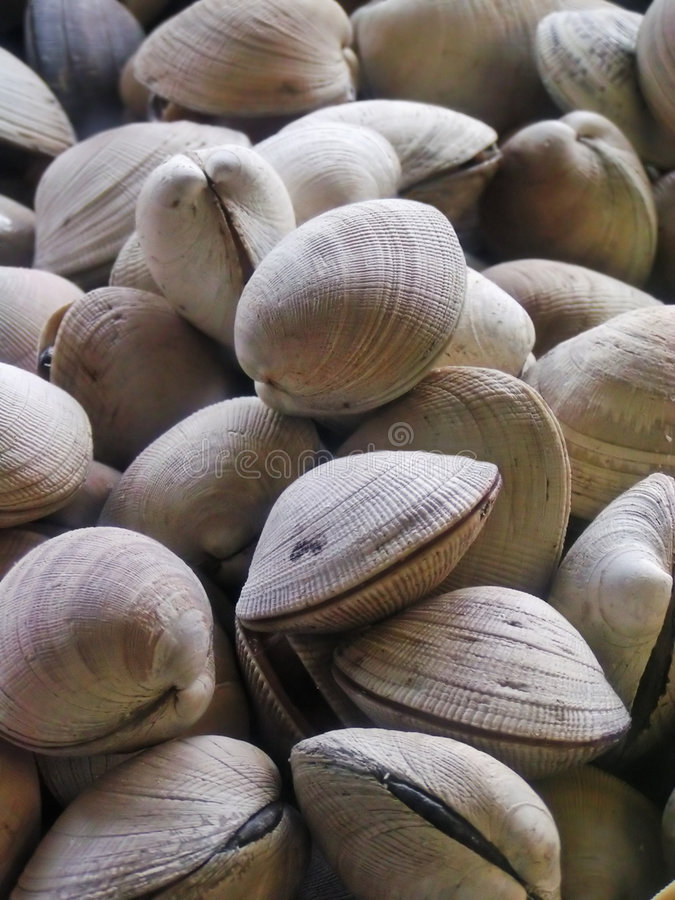 Clams. For sale