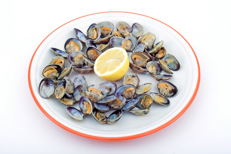 Download Clams stock image. Image of slim, shell, obesity, proteins - 506081