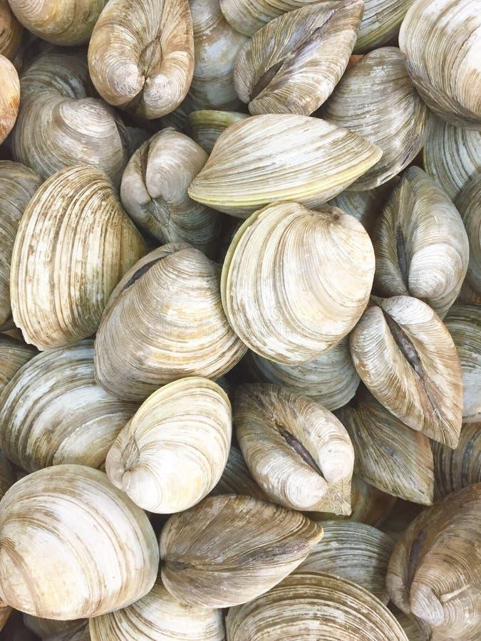 clams royalty-vrije stock afbeelding