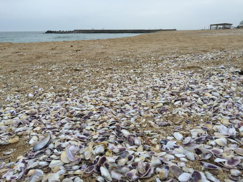 clams royalty-vrije stock foto