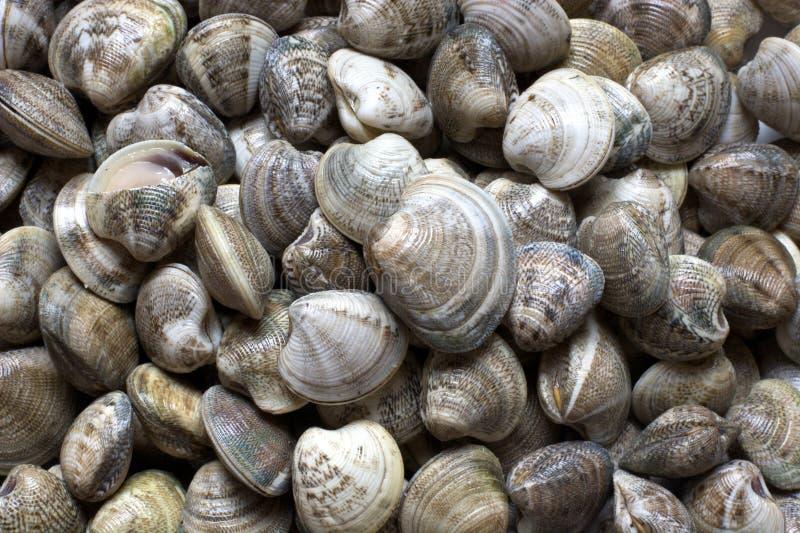 clams stock afbeeldingen