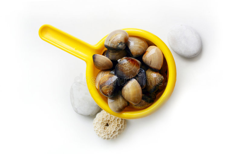 Download Clams - catch of the day stock photo. Image of ingredients - 8552616