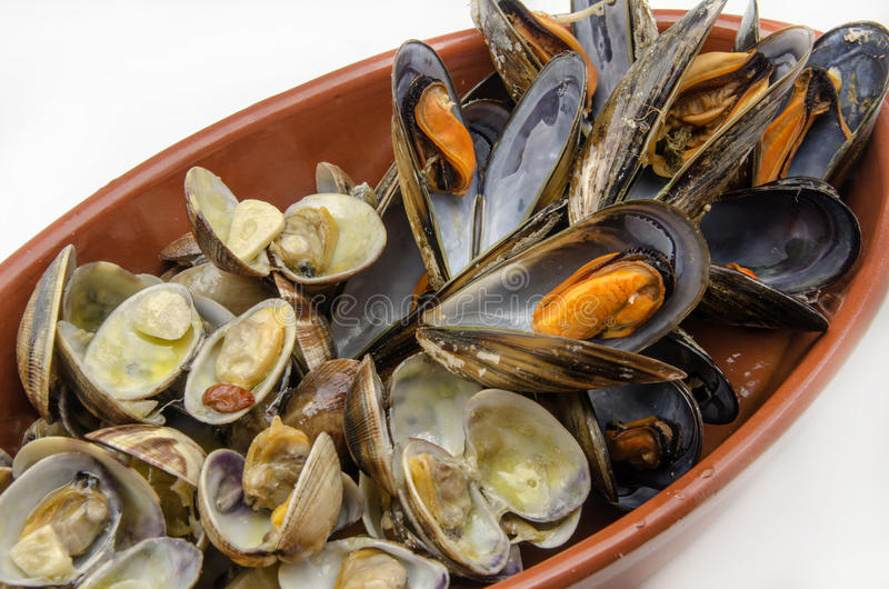 Clams and mussels royalty free stock photos