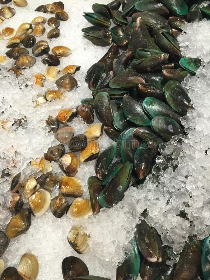 Clams and mussels royalty free stock photography