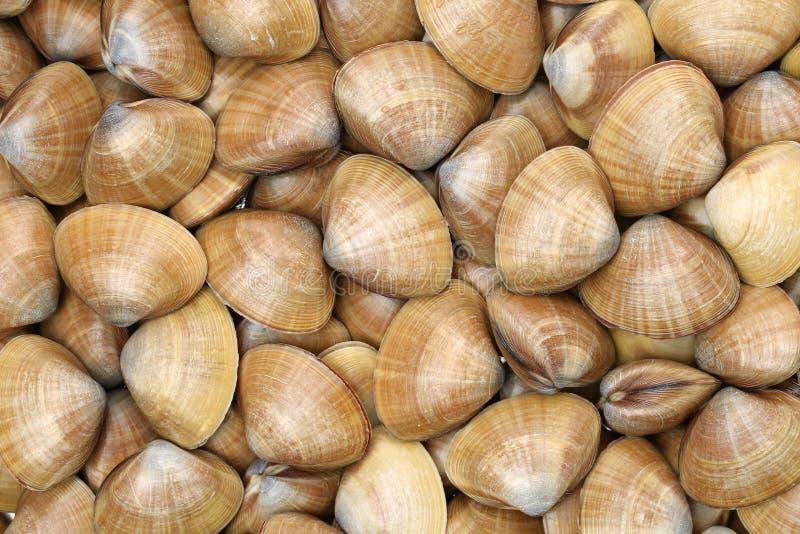 clams Schaaldieren, keuken stock foto