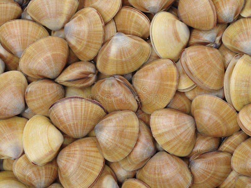 clams Schaaldieren, keuken royalty-vrije stock afbeeldingen