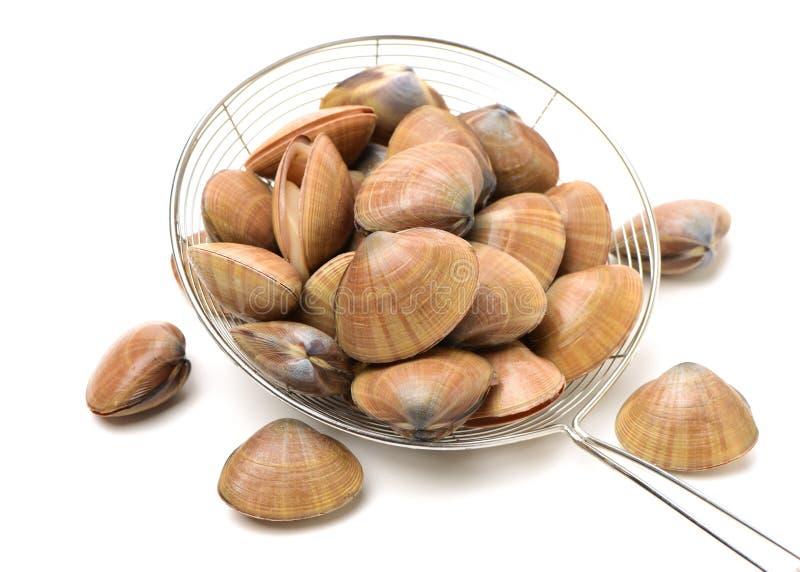 clams Schaaldieren, keuken royalty-vrije stock foto's