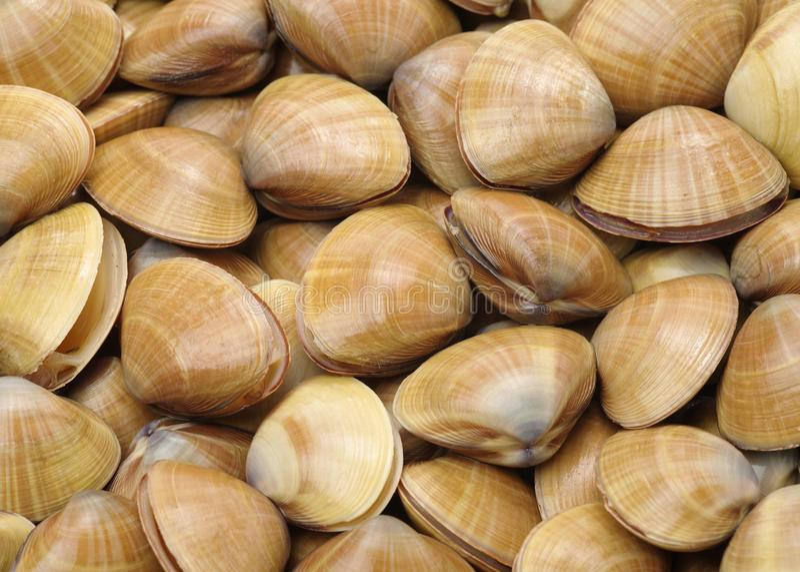 clams Schaaldieren, keuken stock afbeeldingen