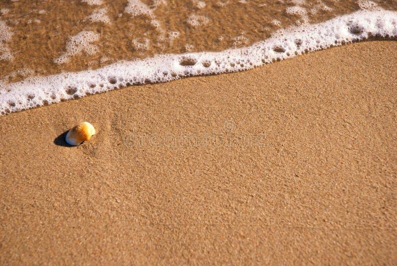 Clamshell на солнечном пляже стоковая фотография