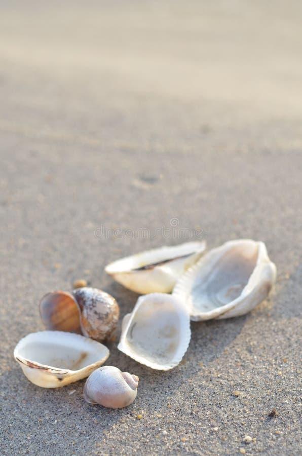 Clamshell на солнечном пляже стоковые фото