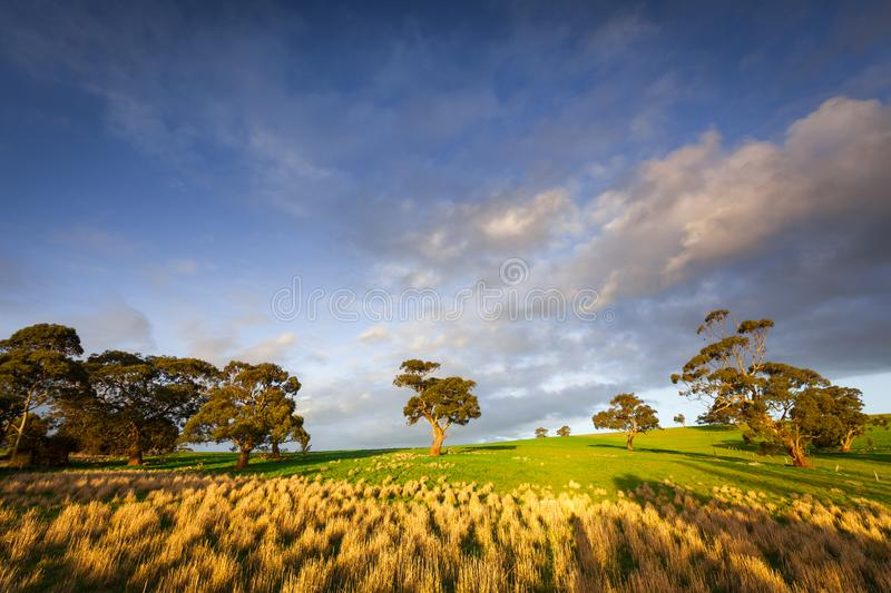 Clare Valley Light imagens de stock royalty free