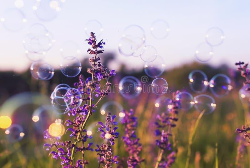 A clareira do espaço livre do verão com as flores lilás delicadas e as bolhas brilhantemente vislumbram e brilham no ar em um por imagens de stock royalty free