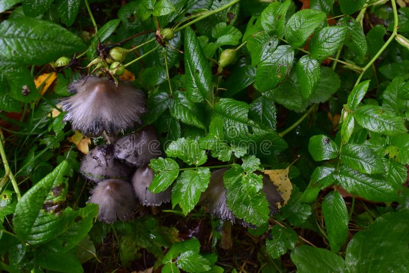 Clareira, floresta, grama, cogumelo foto de stock royalty free