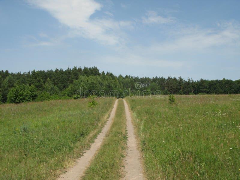 Clareira montanhosa verde do verão fotos de stock