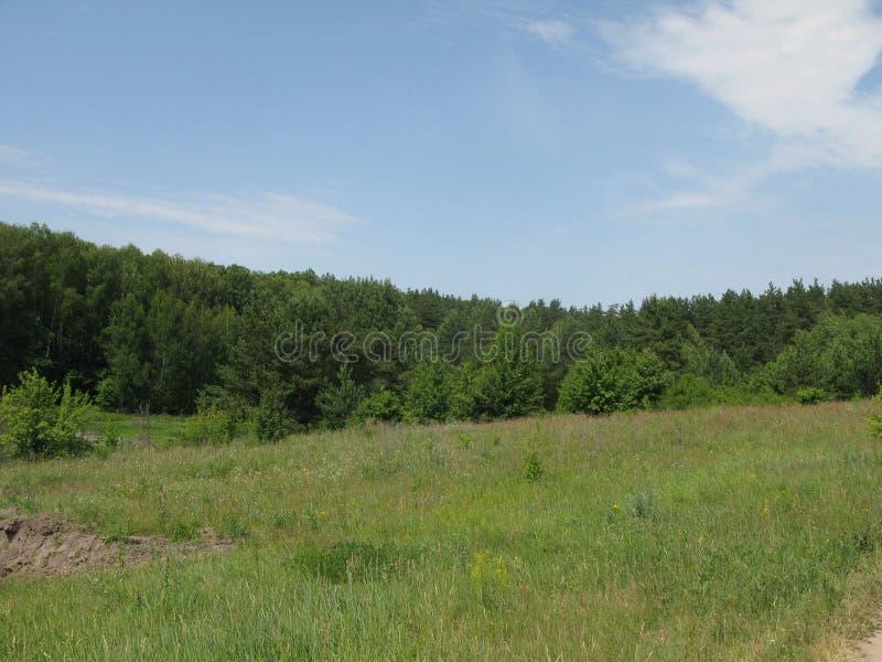 Clareira montanhosa verde do verão foto de stock royalty free