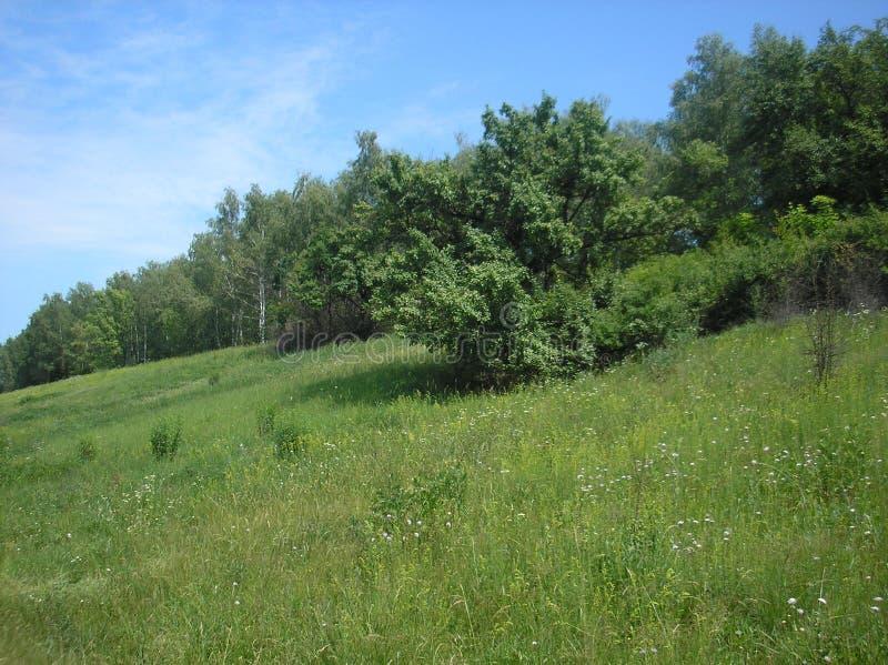 Clareira montanhosa verde do verão imagens de stock