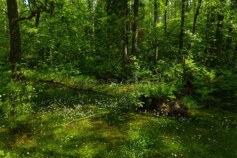 Clareira na floresta verde imagens de stock royalty free
