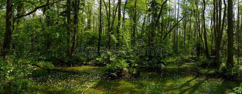 Clareira na floresta verde imagem de stock