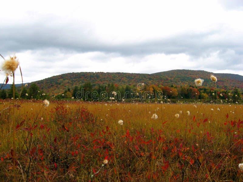 Clareiras do arando, floresta nacional de Monongahela, West Virginia imagem de stock