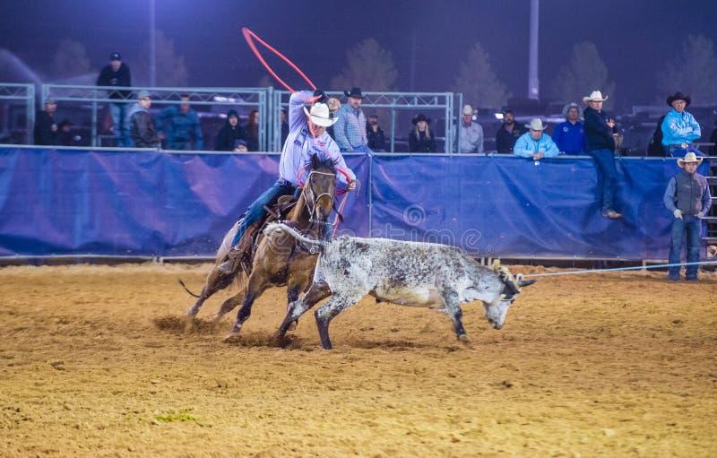 Clark County Fair en Rodeo stock afbeeldingen