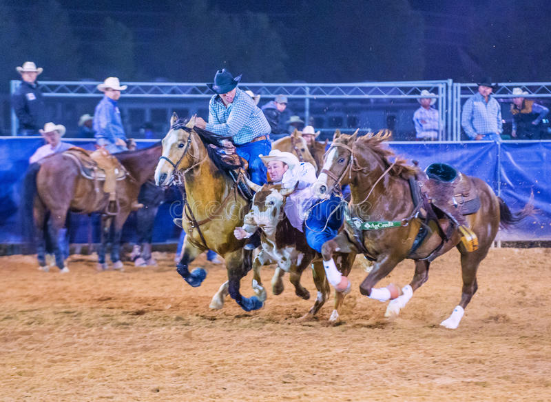 Clark County Fair And Rodeo Editorial Stock Image Image