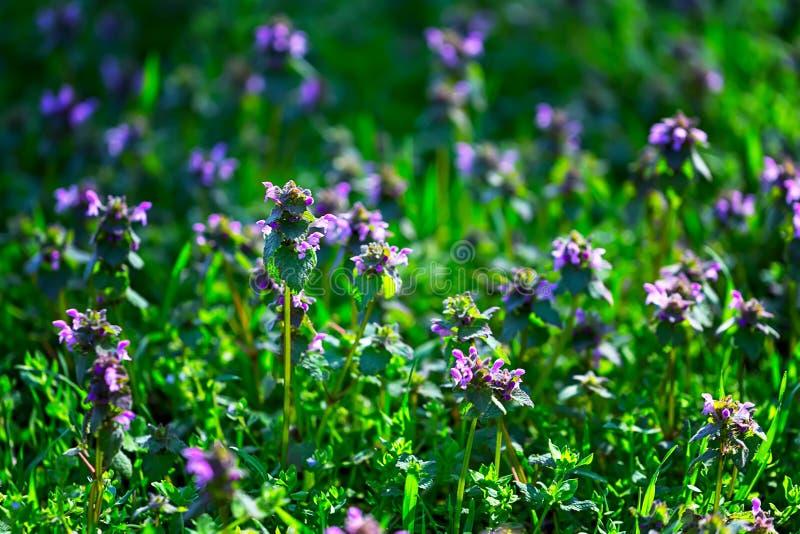 Claro con las flores de la lila Fondo fotografía de archivo libre de regalías