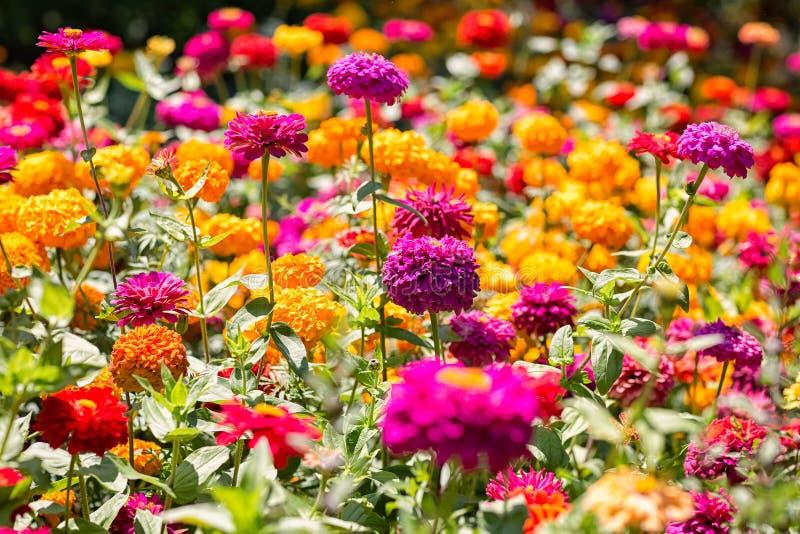 Claro de las flores coloridas del verano foto de archivo