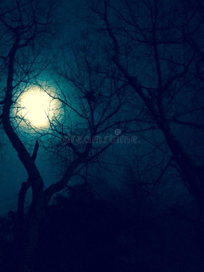 Claro de luna misterioso imágenes de archivo libres de regalías