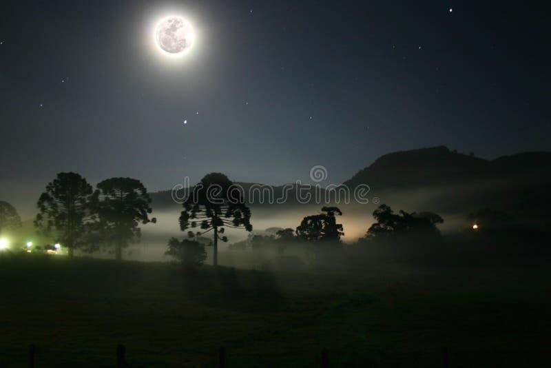Claro de luna sobre árboles fotografía de archivo libre de regalías