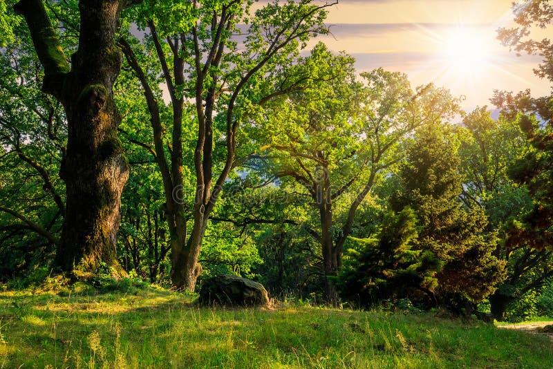 Claro del bosque en la sombra de los árboles en la puesta del sol fotografía de archivo libre de regalías