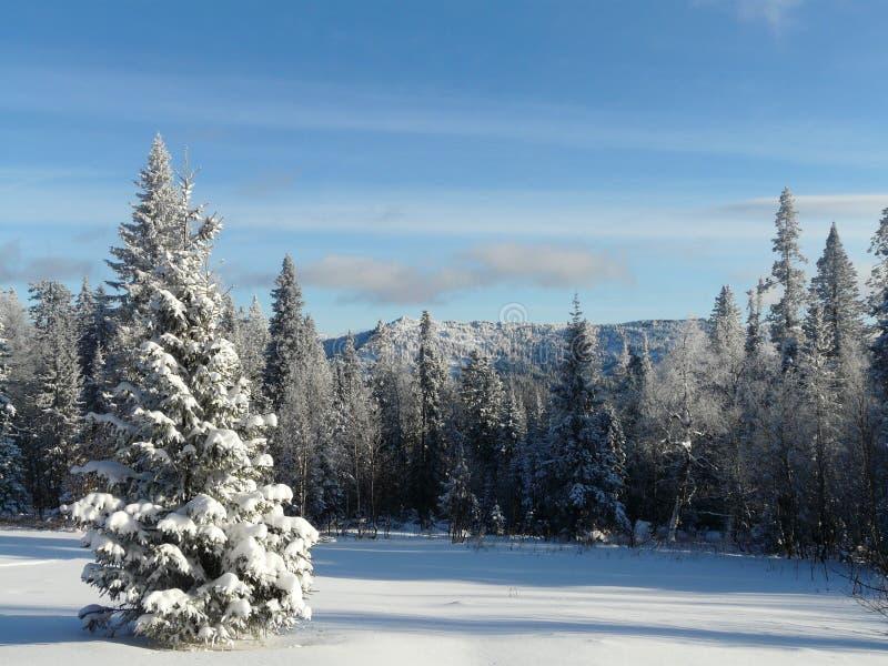 Claro del invierno foto de archivo