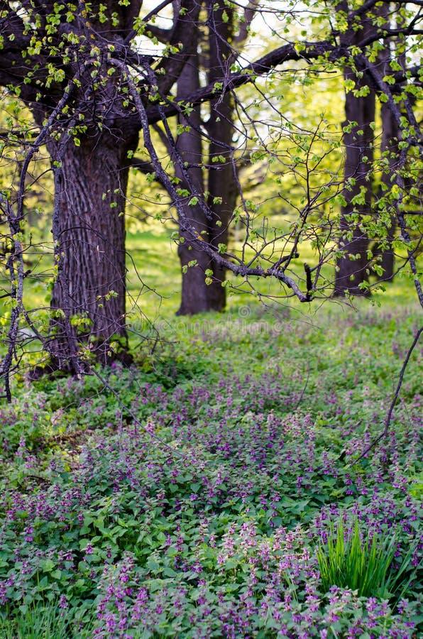 Claro floreciente del bosque, hierba fresca del bosque y pequeñas flores imagen de archivo libre de regalías