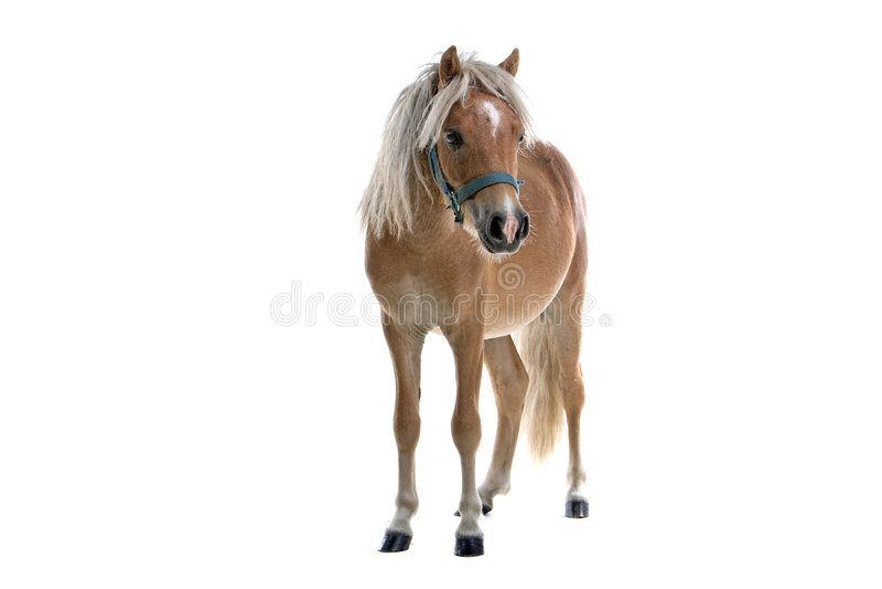 Claro isolado - cavalo marrom imagens de stock