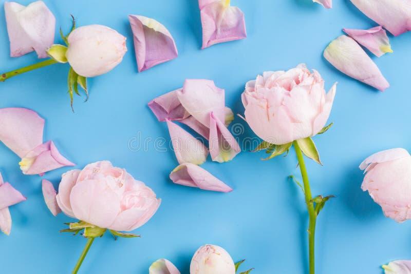 claro - rosas coloridas roxas imagens de stock royalty free