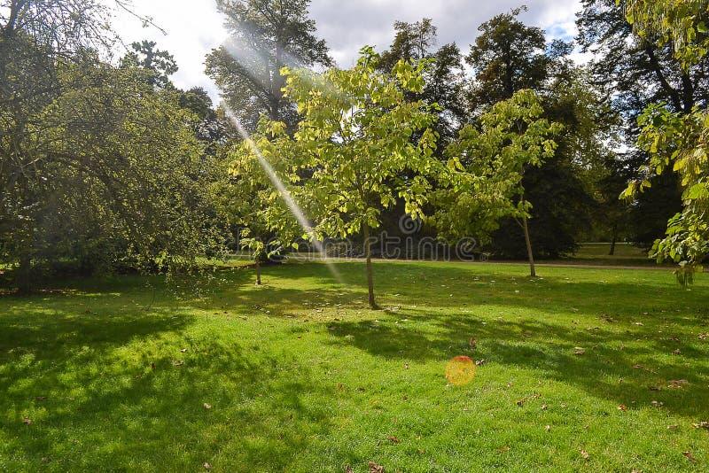 Claro soleado hermoso con los rayos del sol entre los árboles imagenes de archivo