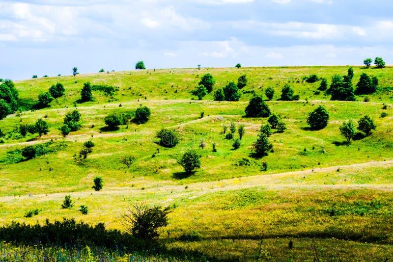 Claro verde del verano fotografía de archivo libre de regalías