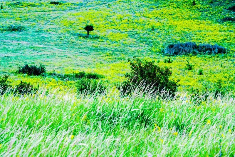 Claro verde del verano imagenes de archivo