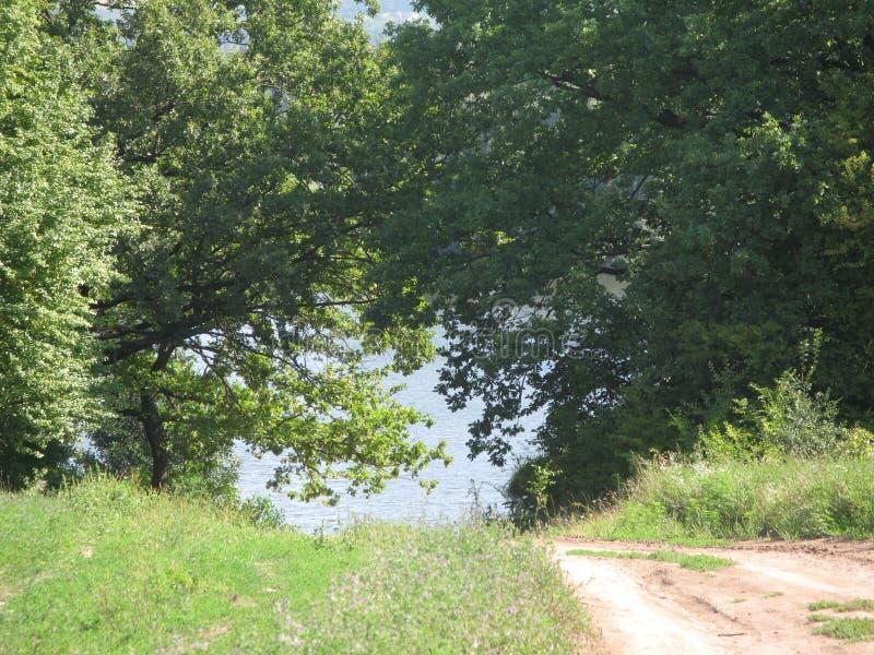 Claro y bosque verdes del verano foto de archivo